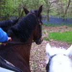 10 horses in the bluebells