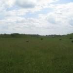 5 Thornborough henge