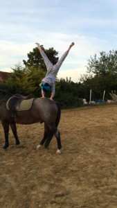 3 Holly horse