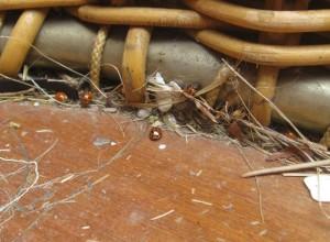 4 ladybird basket