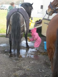 9 izzie horse halton